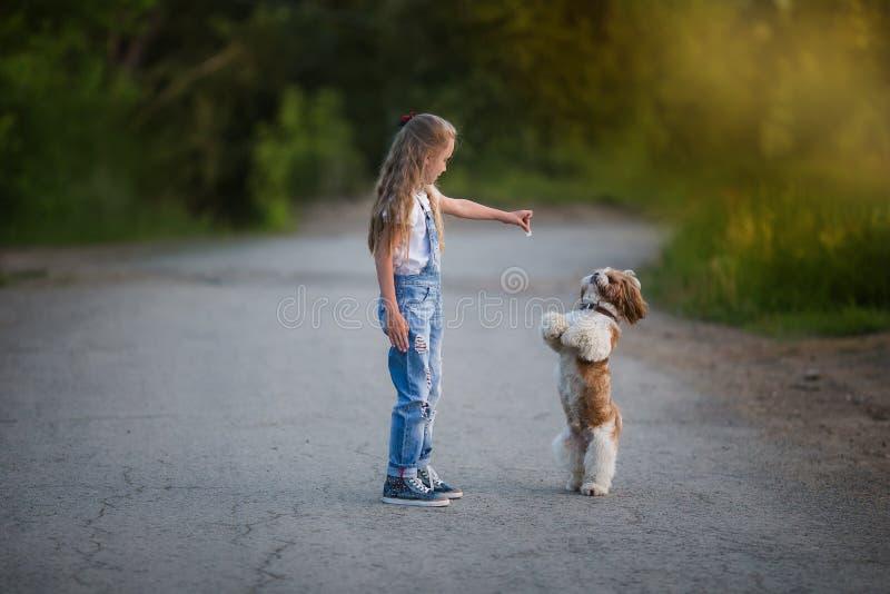 La niña linda es que juega y de entrenamiento de un pequeño perro en el verano fotos de archivo