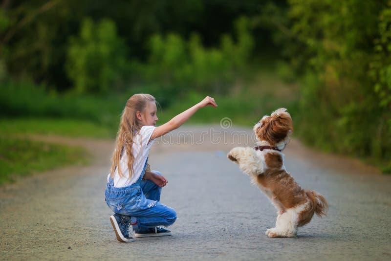 La niña linda es que juega y de entrenamiento de un pequeño perro en el verano en el parque imagenes de archivo