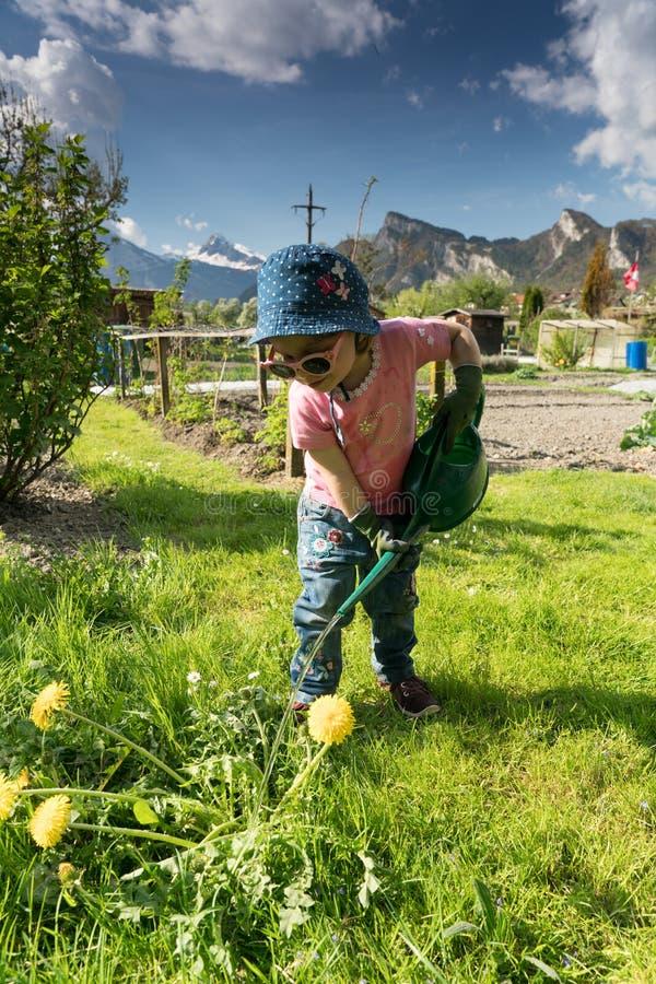 La niña pequeña linda joven ayuda en el huerto por las plantas de riego fotografía de archivo libre de regalías