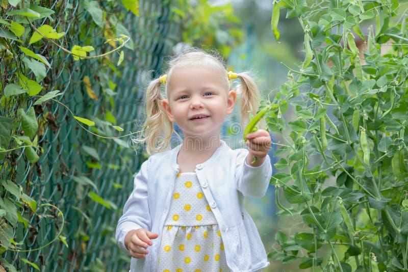 La niña recolecta una cosecha de verduras imagenes de archivo