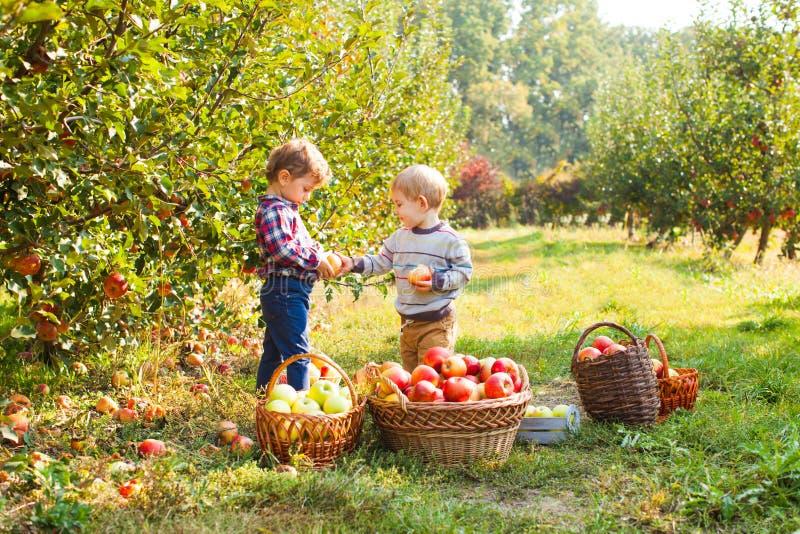 La niña y el muchacho juegan en huerta del manzano imagenes de archivo