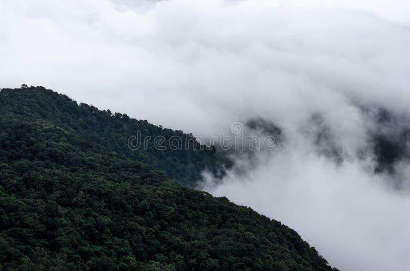 La niebla bajo la lluvia en la alta montaña en el parque nacional de Phu Ruea, provincia de Loei, Tailandia imagen de archivo