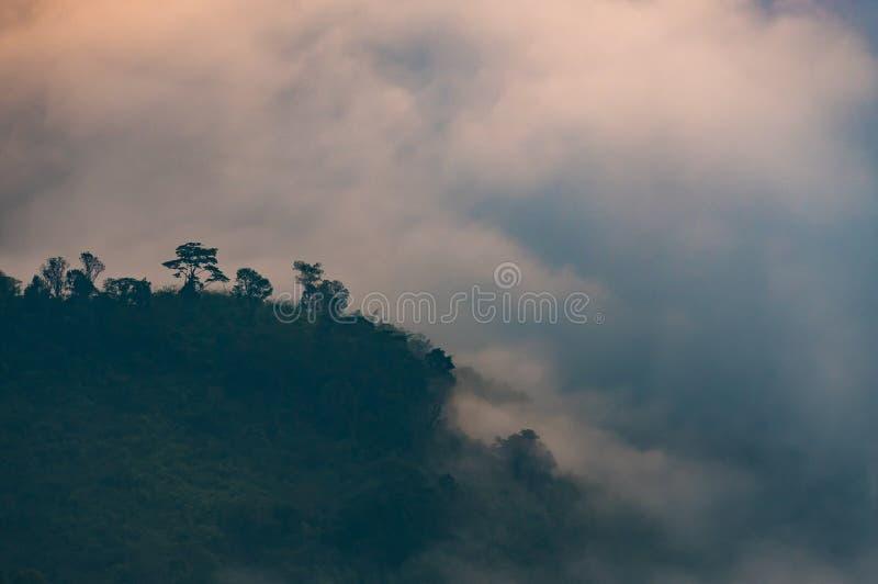 La niebla del misterio cubrió el bosque en la montaña imagenes de archivo