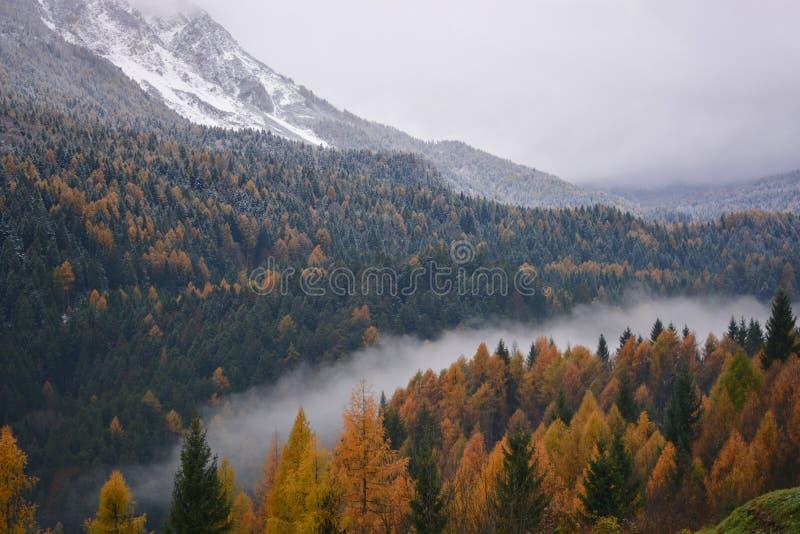 la niebla en el valle del río está dividiendo las dos estaciones el otoño a partir del invierno foto de archivo libre de regalías