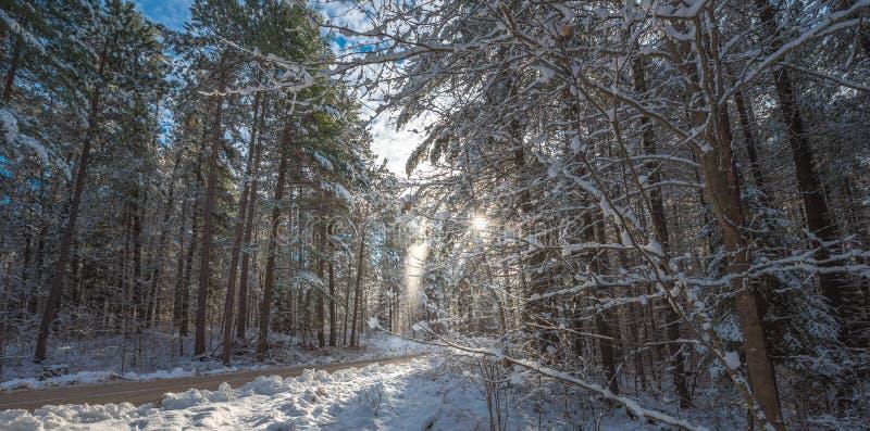 La nieve cae de los pinos cubiertos - bosques hermosos a lo largo de los caminos rurales imagenes de archivo