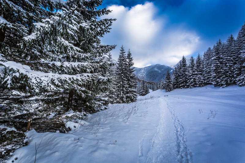 La nieve capsuló las trayectorias de bosque en un rastro de montaña imagenes de archivo