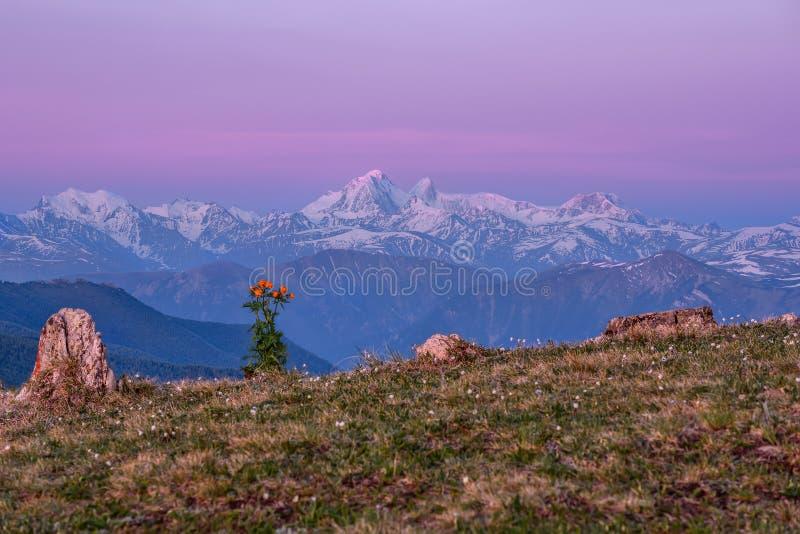 La nieve de las montañas florece rosa de la salida del sol fotografía de archivo libre de regalías