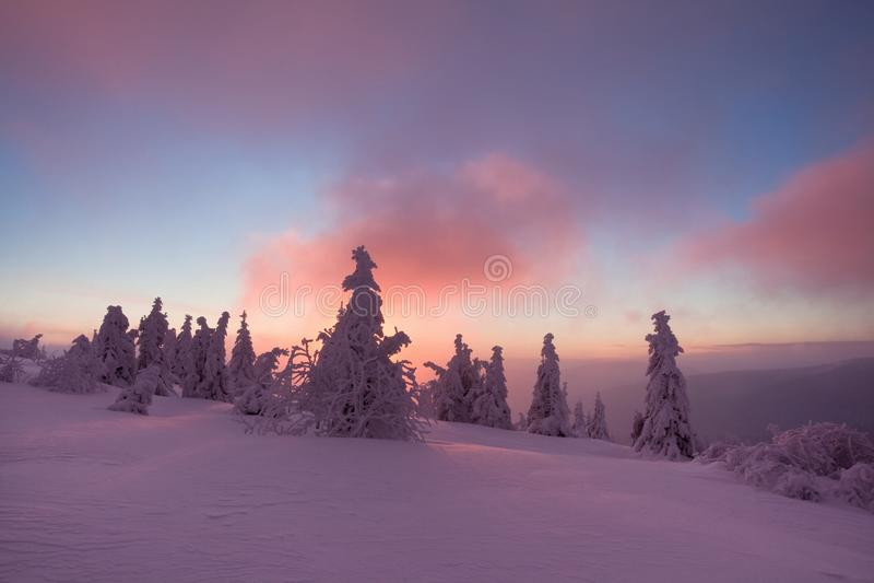 La nieve del bosque de la nieve del invierno miente en las ramas de árboles Tiempo nevoso escarchado Bosque hermoso de la fantasí imágenes de archivo libres de regalías