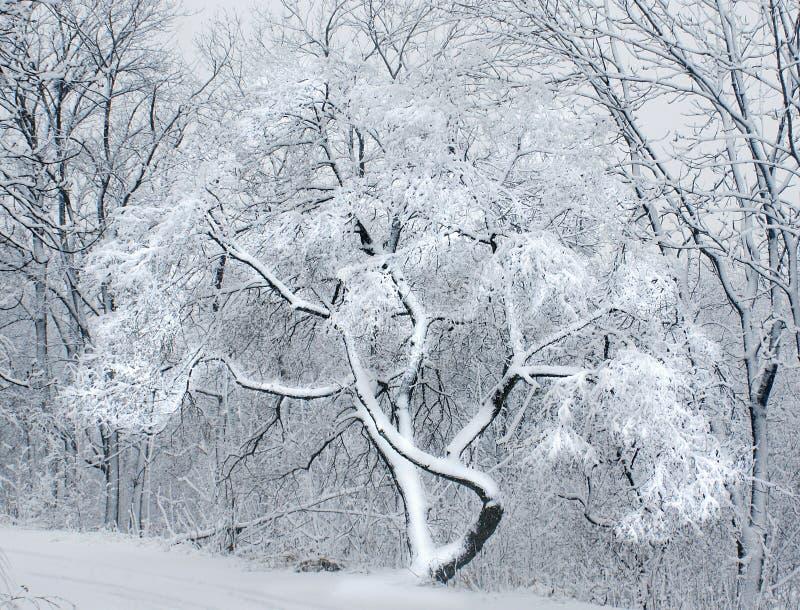 La nieve en el bosque. fotografía de archivo