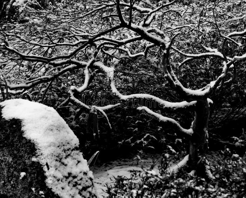 La nieve ligera resume formas de las ramas de árbol fotografía de archivo