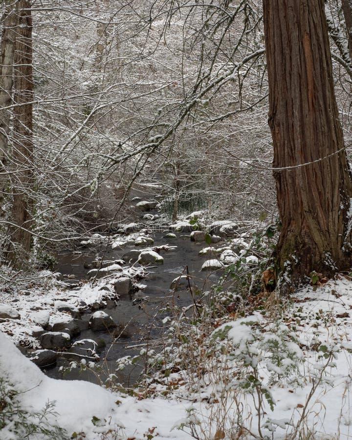La nieve ligera resume formas de las ramas de árbol imágenes de archivo libres de regalías