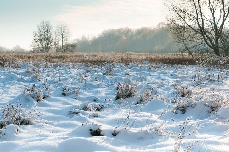 La nieve miente en los campos, los árboles nevados y la hierba, paisaje del campo del invierno imagen de archivo