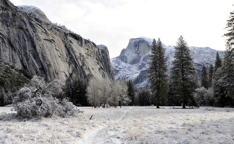 La nieve y el hielo cubrieron árboles imagenes de archivo