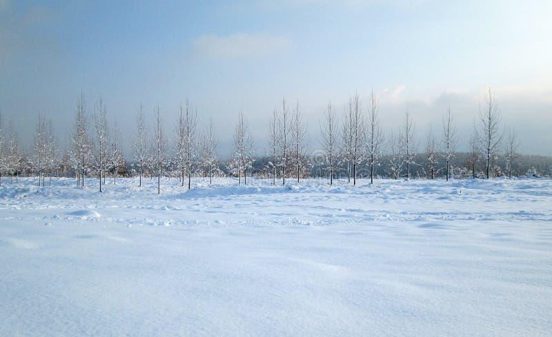 La nieve y el hielo cubrieron árboles en el día de congelación del invierno Ambiente de Danubio del río, Futog Serbia fotos de archivo libres de regalías