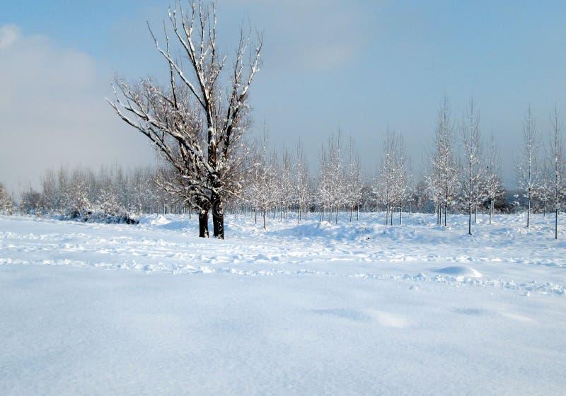 La nieve y el hielo cubrieron árboles en el día de congelación del invierno Ambiente de Danubio del río, Futog Serbia imágenes de archivo libres de regalías