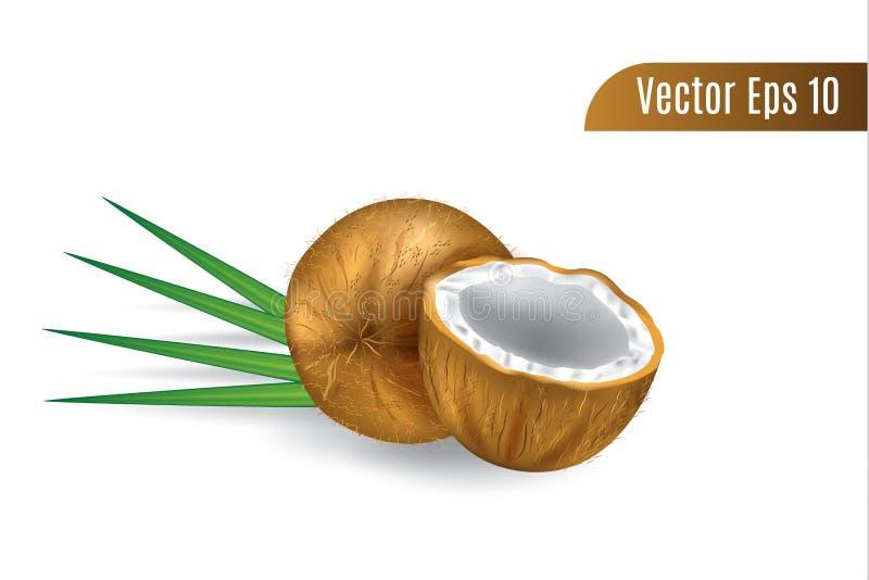 La noce di cocco realistica o di marrone di vettore 3d ha isolato il fondo illustrazione di stock