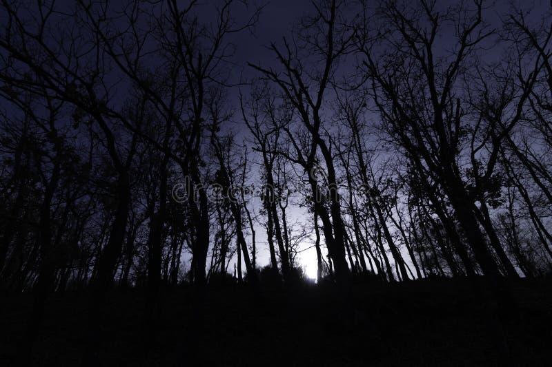 La noche cae en el bosque oscuro y misterioso fotos de archivo libres de regalías