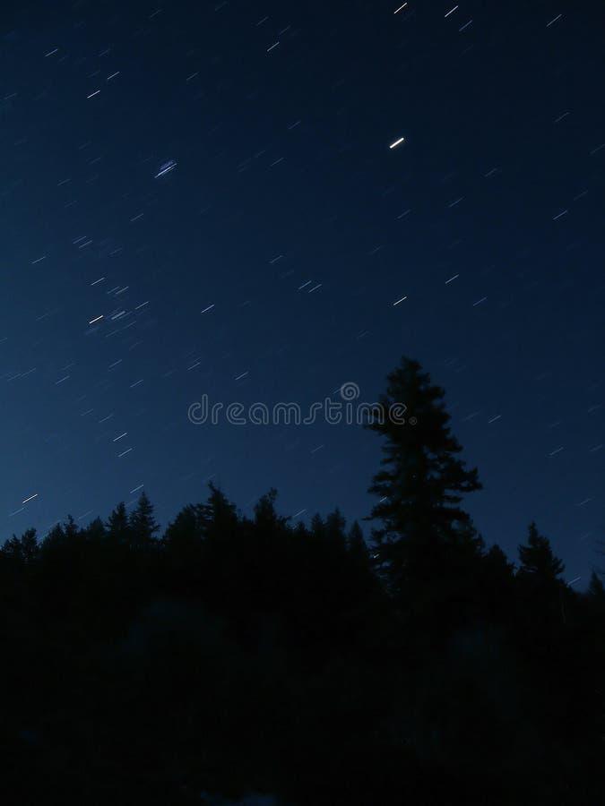 La noche Stars árboles de la silueta foto de archivo libre de regalías