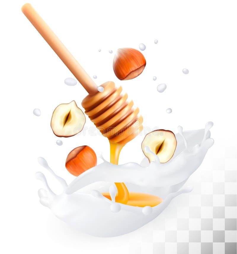 La noisette et le miel dans un lait éclaboussent sur un fond transparent illustration de vecteur