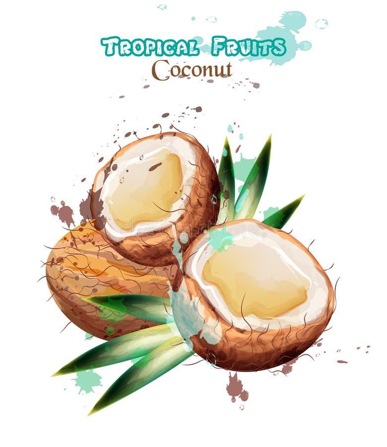 La noix de coco porte des fruits vecteur d'aquarelle Illustrations d'isolement par conception colorée délicieuse illustration libre de droits