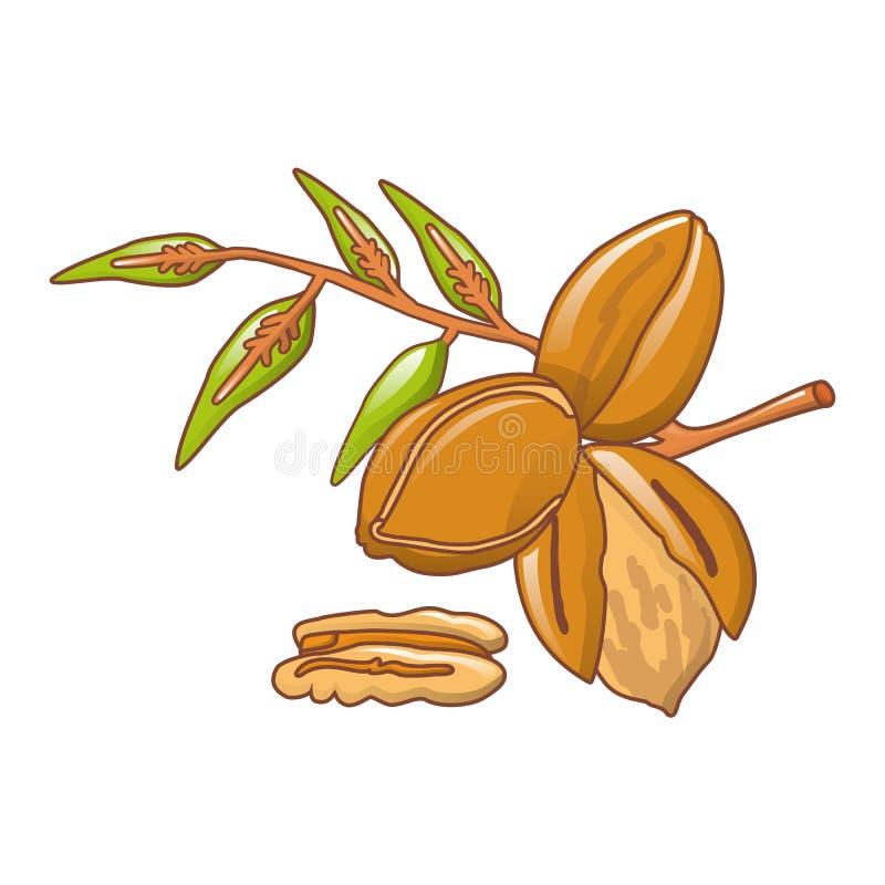 La noix de pécan part de l'icône, style de bande dessinée illustration de vecteur