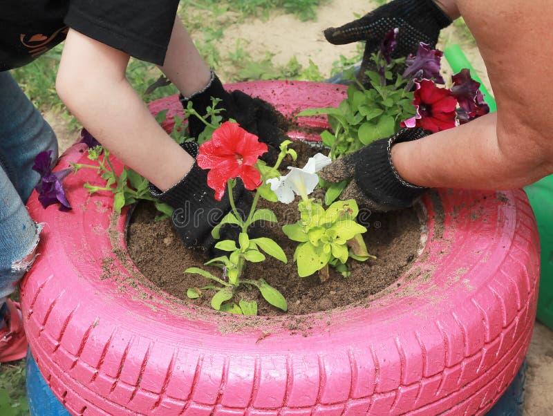 la nonna insegna alla nipote adolescente a piantare i fiori fotografie stock libere da diritti