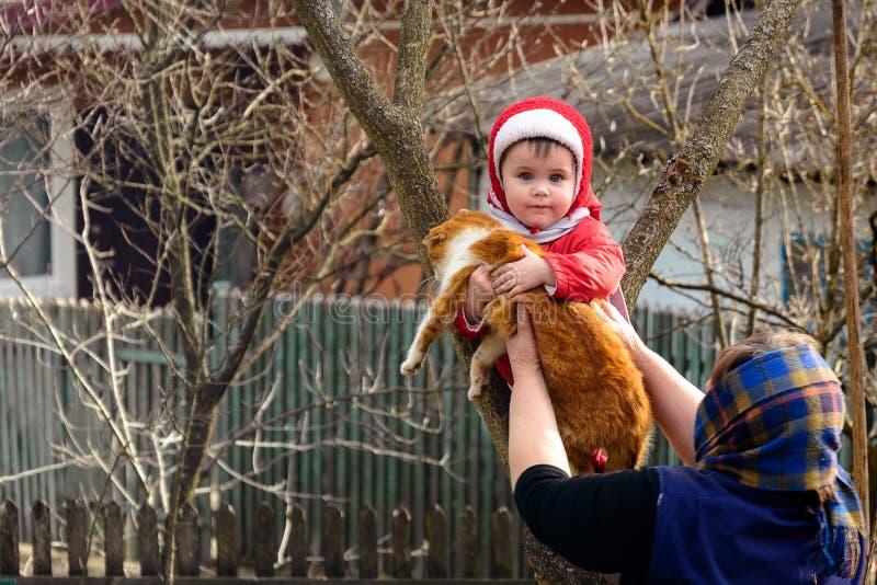 La nonna rurale dà nelle mani di un gatto un bambino che ha scalato un albero immagini stock libere da diritti