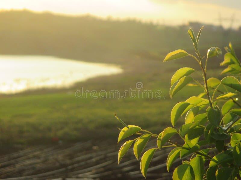 La nostra bella azienda agricola fotografie stock libere da diritti