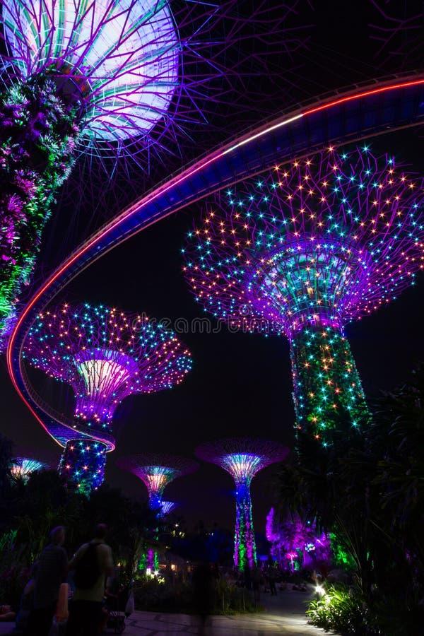 La notte ha sparato i giardini dai supertrees della baia, Singapore durante lo spettacolo di luci quotidiano immagini stock