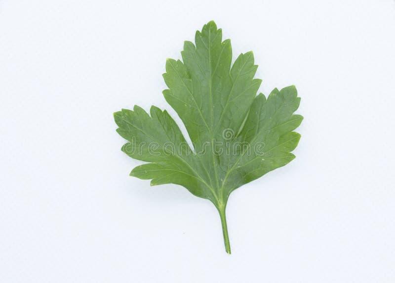 La nourriture garnissent et assaisonnant, feuille aromatique d'herbe de persil de vert d'isolement photo libre de droits
