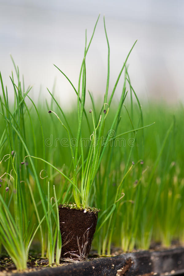 La nouvelle vie de jeune usine, la jeune plante verte de CSR de jour d'environnement du monde d'écologie de jeune arbre vont des  photographie stock libre de droits