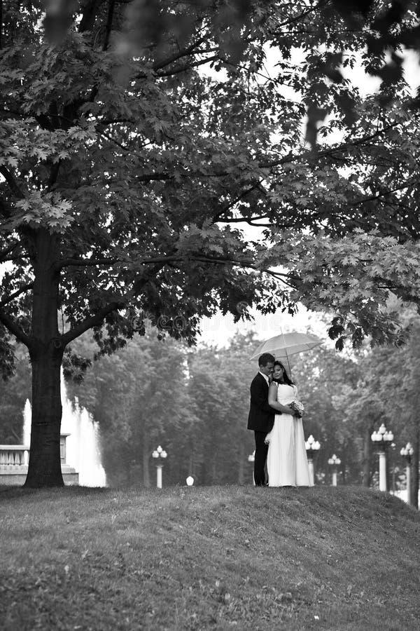 La novia y el novio, abrazando el soporte cerca del árbol debajo de un paraguas blanco foto de archivo