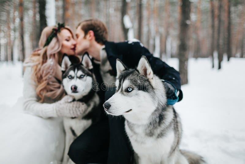 La novia y el novio borrosos se están besando en fondo del perro esquimal syberian Boda del invierno ilustraciones fotos de archivo libres de regalías