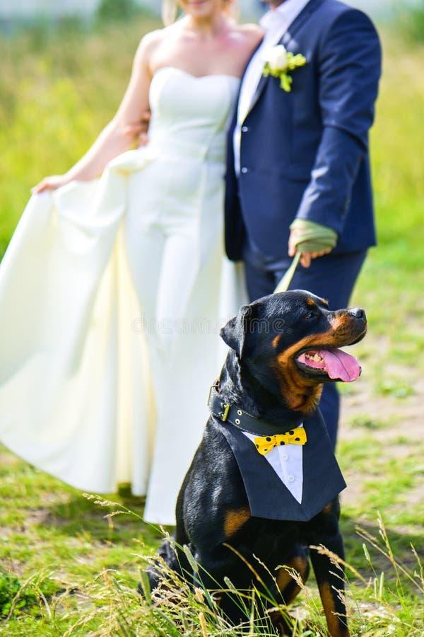 La novia y preparar para tirar del perro de Rottweiler en un correo en el verano en un claro verde imágenes de archivo libres de regalías