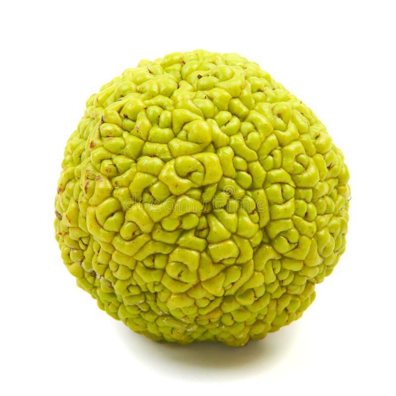 La nuez de Adán, naranja de Osage de la fruta (pomifera) del Maclura, Ind chino imágenes de archivo libres de regalías