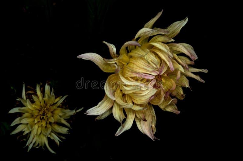 La nuit de la fleur photos stock