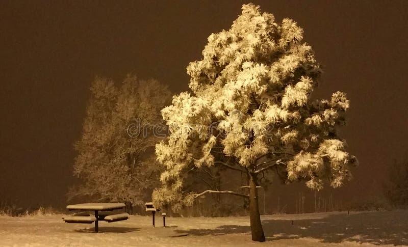 La nuit parfaite photos libres de droits
