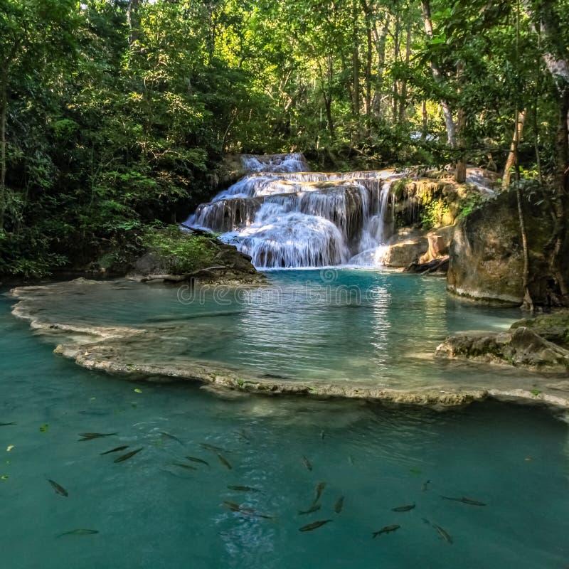 La nuotata del pesce in acqua innaffia al fondo di una serie di belle brevi cascate nella foresta densa di Erawan fotografia stock