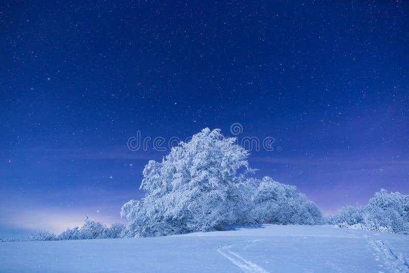 La observación de un bosque en invierno durante la noche es una de la cosa más hermosa que una puede hacer en las montañas fotografía de archivo libre de regalías