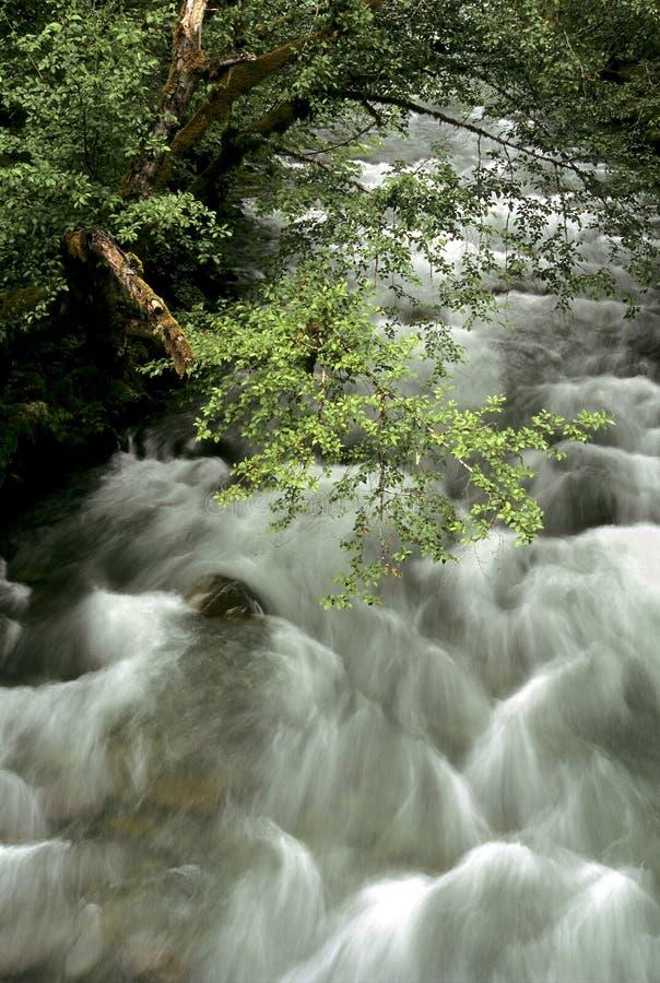 La Ohanapocosh河wis 图库摄影