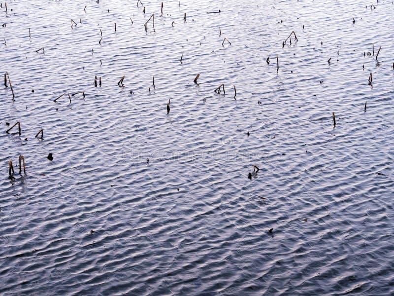 La ondulación en la superficie del agua y la hierba stubble foto de archivo