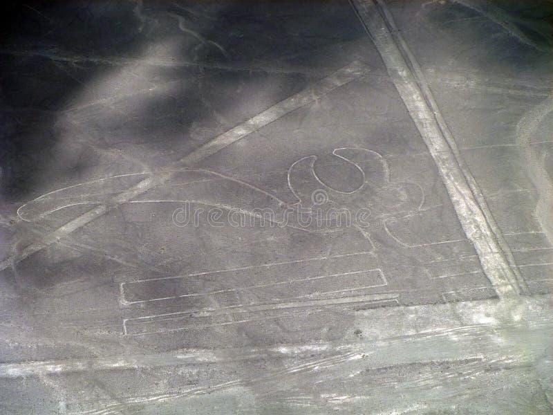 La opinión aérea el loro, Nazca alinea, Perú imagenes de archivo