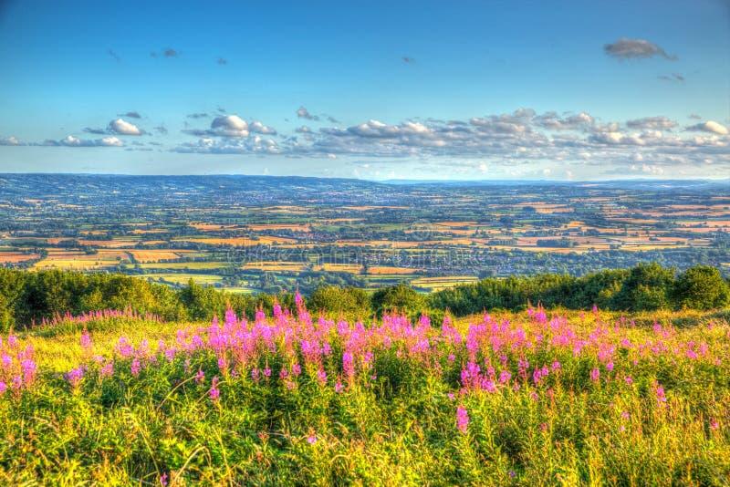 La opinión BRITÁNICA de Somerset England de las colinas de Quantock en la dirección de las colinas de Blackdown con rosa florece  foto de archivo