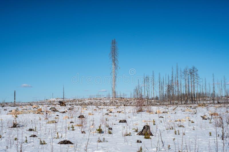 La opinión del invierno de los restos de un bosque devastó por un fuego fotografía de archivo