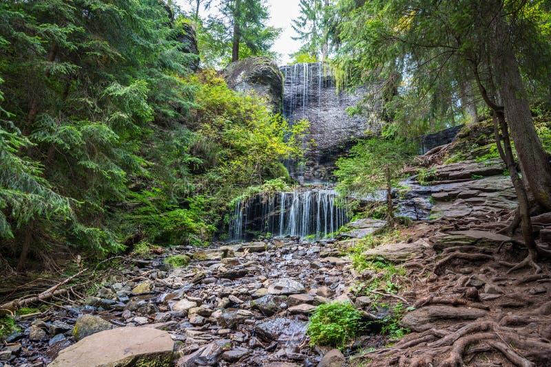 La opinión escénica de la pequeña cascada hermosa, única, cristalina, árbol de pino arraiga en el primero plano en Transilvania,  imágenes de archivo libres de regalías
