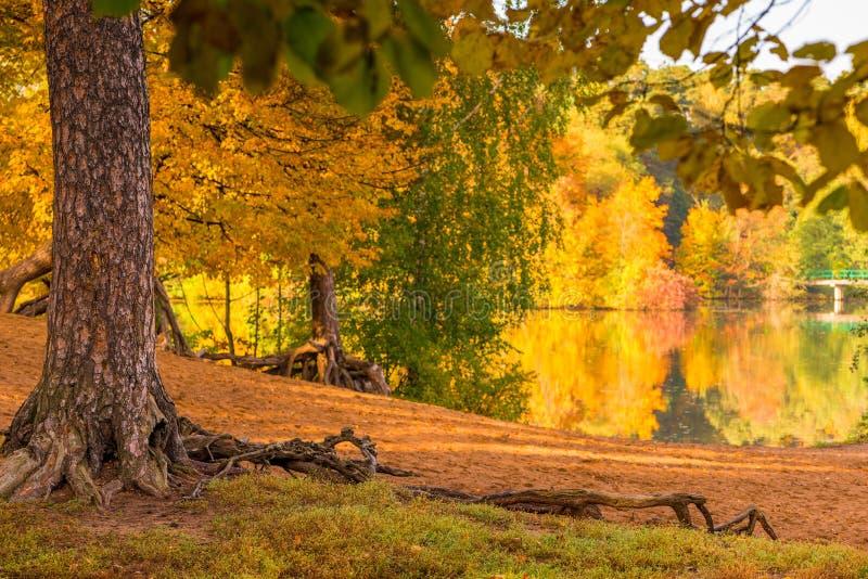 La orilla de un lago en un parque del otoño, el follaje coloreado de árboles fotografía de archivo libre de regalías