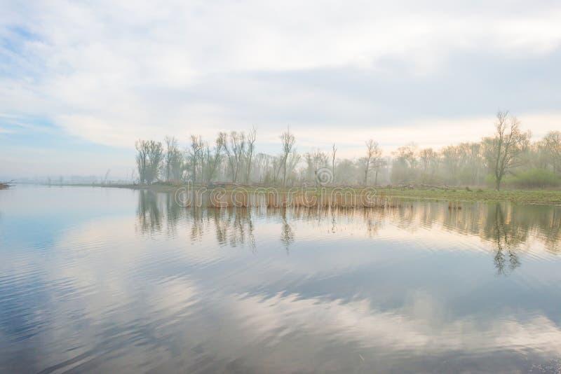 La orilla de un lago de niebla en primavera imágenes de archivo libres de regalías