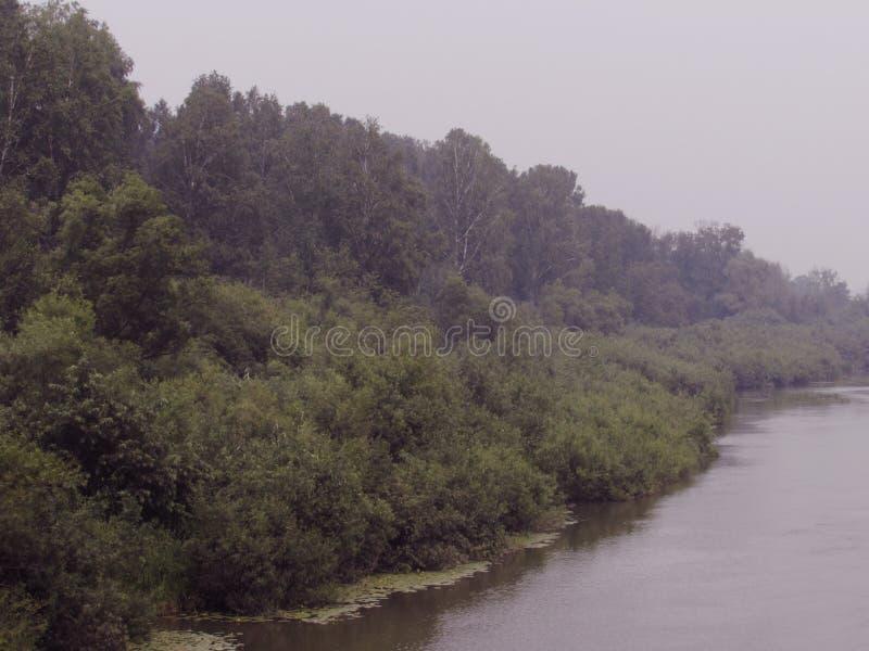 La orilla del río se crece demasiado con los arbustos, árboles con los lirios de agua en un día de niebla azul foto de archivo libre de regalías