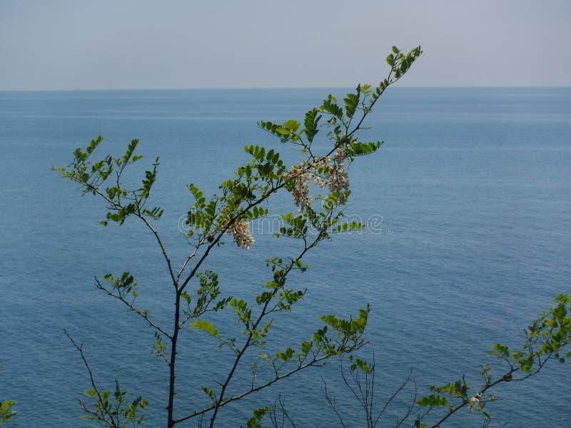 La orilla y los diversos edificios en el pueblo de Volkonskaya en la costa del Mar Negro, la mayor región de Sochi foto de archivo
