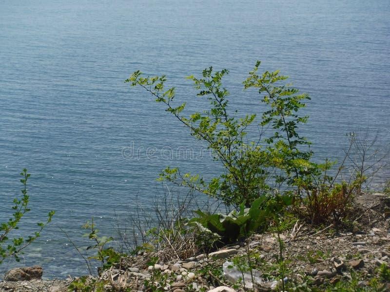 La orilla y los diversos edificios en el pueblo de Volkonskaya en la costa del Mar Negro, la mayor región de Sochi fotos de archivo libres de regalías